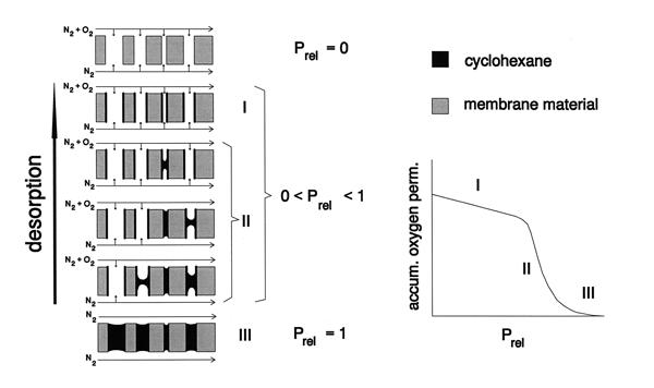 Permporometrie schematisch principe